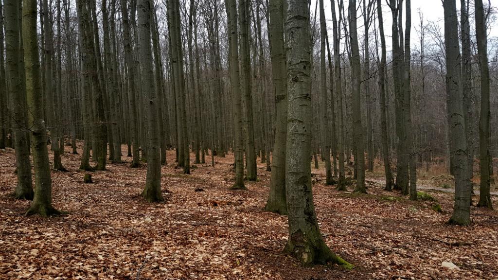 les-pod-velkou-homolou