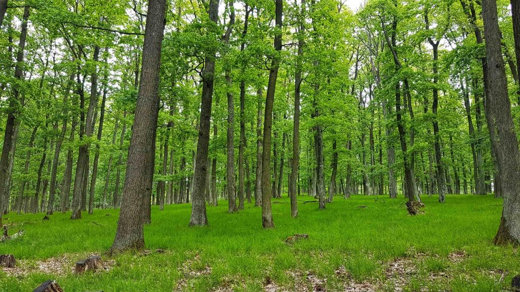 les-pod-vrcholom-kozlisov