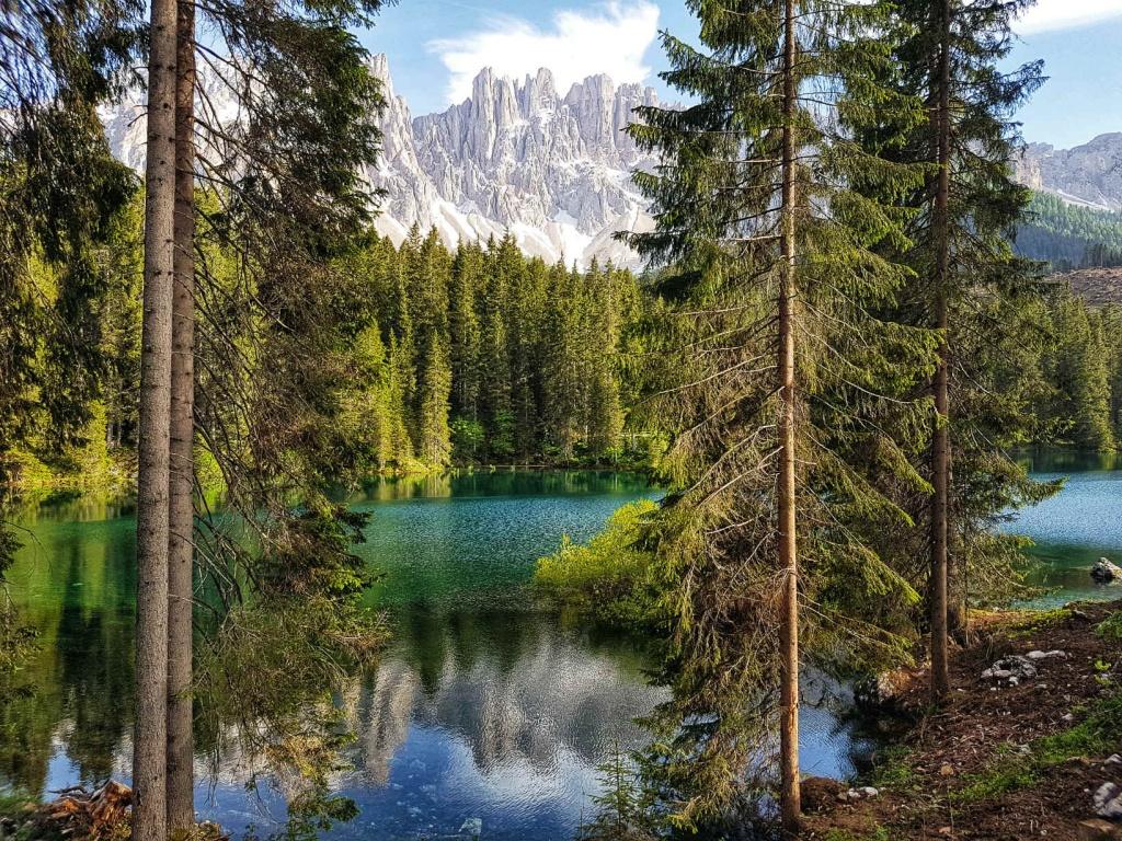 priroda-v-okoli-lago-di-carezza