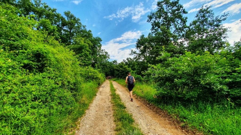 lesna-cesta-z-obce-vozokany