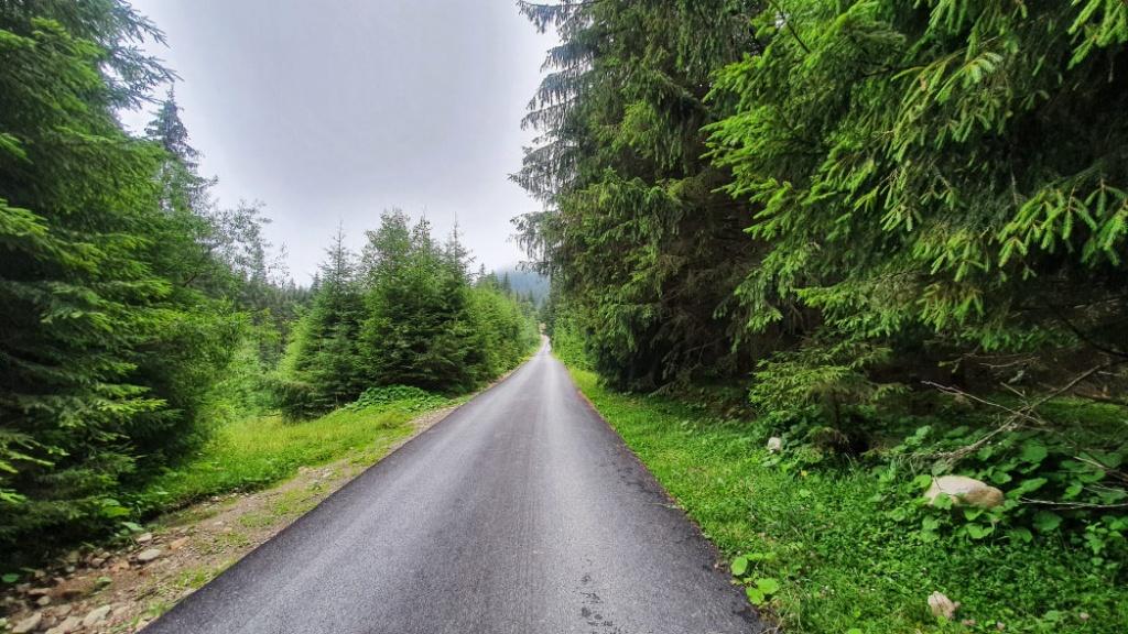 cesta-smer-strazca-lesa