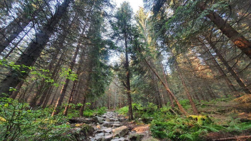 trasa-na-rohacsky-vodopad